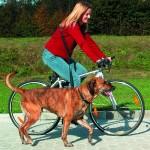 Sifra: 1282 Povodac za bicikl i dzogiranje 1,00-2,00m/25mm plavi