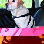 Sifra: 1293 Sigurnosni pojas za psa vel.xl obim poprsja 80-110 cm