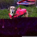 Sifra: 30142 Prsluk za spasavanje, za pse, 36 cm, s