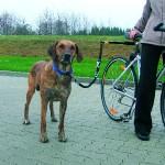 Sifra: 1283 Biker-set za bicikle, drzi odstojanje