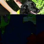 Sifra: 2344 Peskir za pse, 50x60cm