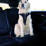 Sifra: 12858 Dog protect sigurnosni am, 50-65cm/20mm, crni