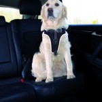 Sifra: 12857 Dog protect sigurnosni am, 65-80cm/20mm, crni
