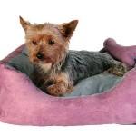 "Šifra: 37491 Krevet za pse ""chippy"" 40x40x15cm,roze/siva"