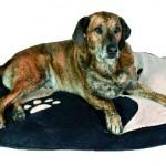 """Šifra: 37115 Jastuk za pse """"yinya"""", 90 x 65 cm"""