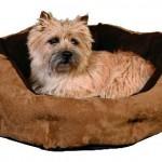 """Šifra: 37553 Krevet za pse """"karima"""", 90 x 28 cm, siva-crvena"""