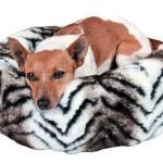 """Šifra: 3687 Krevet za pse """"zabou"""", 50 cm"""