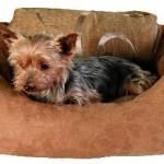 """Šifra: 36791 Krevet za pse """"blanka"""", 60 x 46 cm,zlatno-braon"""