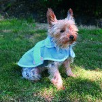 """Šifra: 30581 """"lilles"""", mantil za pse, 40 cm,plavi"""