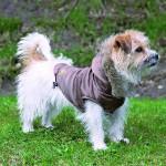 """Šifra: 30824 """"torino"""" mantil za pse, bronza, m, 45cm"""