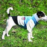 """Šifra: 30602 """"toronto"""" mantil za pse, plavo-belo-crni, s, 35cm"""