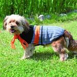 Šifra: 30990 Montreal prsluk za pse, xs, 25cm, plavo-sivo-nadandzasti