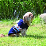 Šifra: 31001 Winipeg prsluk za pse, xs, 30cm, plavo-narandzasto-beli