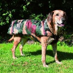 """Šifra: 30774 """"cayenne"""", mantil za pse, m, 45cm, camouflage"""