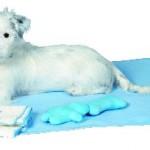 Šifra: 15588 Puppy set, cebe 76x50cm, peskir 50x40cm, 2 plis.igracke, plavo