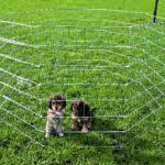 Šifra: 3954 Zicana ograda za stence, 8 strana,60x 91 cm