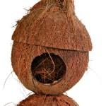 Šifra: 6209 Kucica od kokosa, 13x22cm
