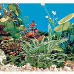 Šifra: 8126 Pozadina za akvarijum, dupla, slatka voda 80 cm