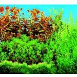 Šifra: 8125 Pozadina za akvarijum,dupla,slatka voda 60 cm x 30 m