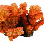 Šifra: 8838 Prsatasti koral,12 cm