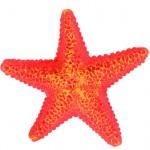 Šifra: 8866 Set od 12 morskih zvezda