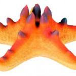 Šifra: 8896 Morska zvezda sa magnetom. 10.5 cm
